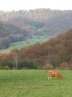 files/lama-urlaub/Attraktionen der Region/20141101_104641.jpg